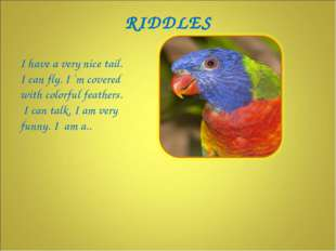I have a very nice tail. I can fly. I `m covered with colorful feathers. I ca