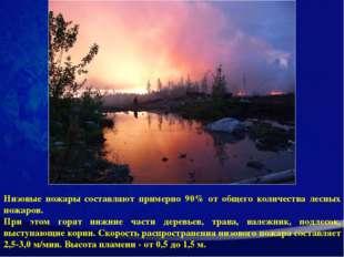 Низовые пожары составляют примерно 90% от общего количества лесных пожаров. П