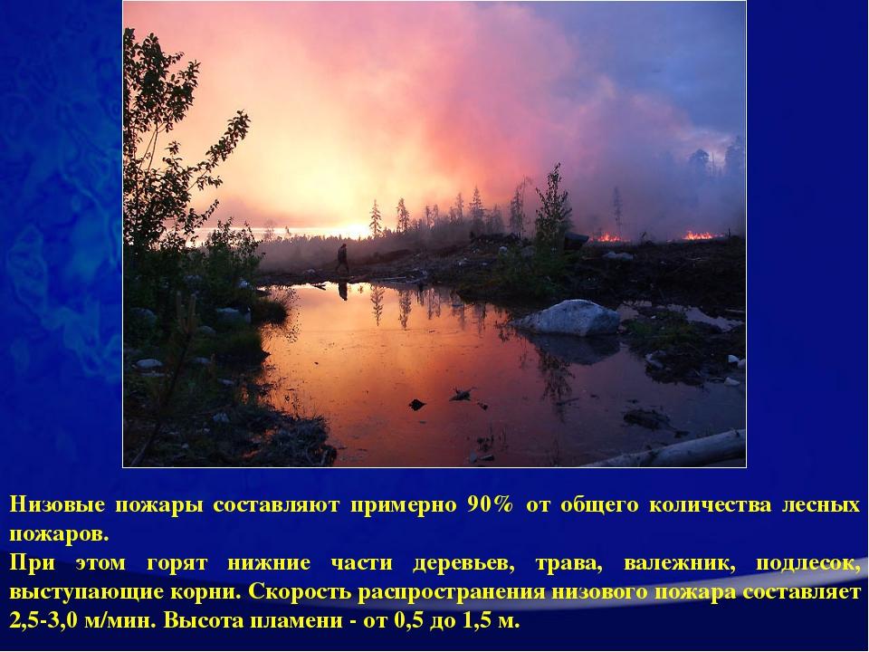 Низовые пожары составляют примерно 90% от общего количества лесных пожаров. П...
