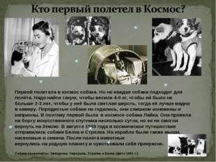 Первой полетела в космос собака. Но не каждая собака подходит для полёта. На