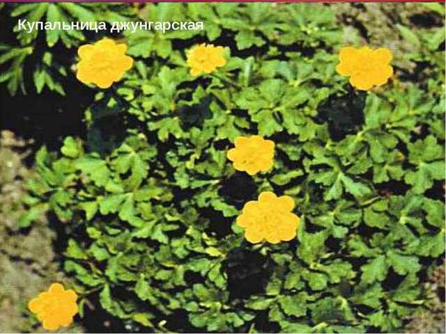 Природные зоны Используя схему высотной поясности и текст учебника (стр. 204-...
