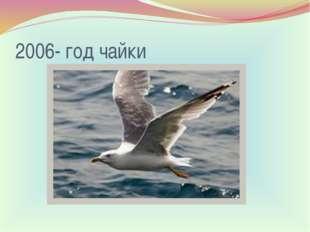 2006- год чайки