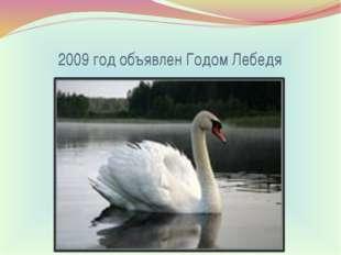 2009 год объявлен Годом Лебедя