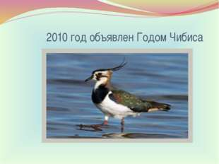 2010 год объявлен Годом Чибиса