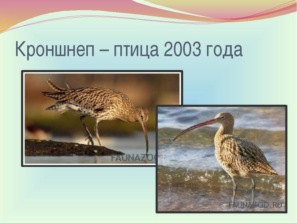 Кроншнеп – птица 2003 года