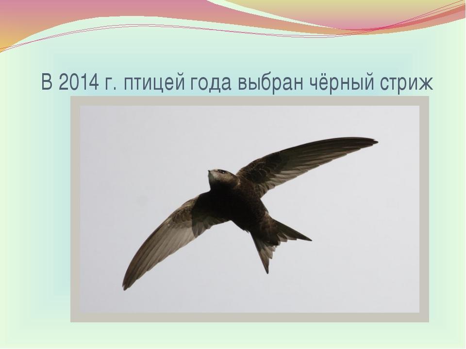 В 2014 г. птицей года выбран чёрный стриж