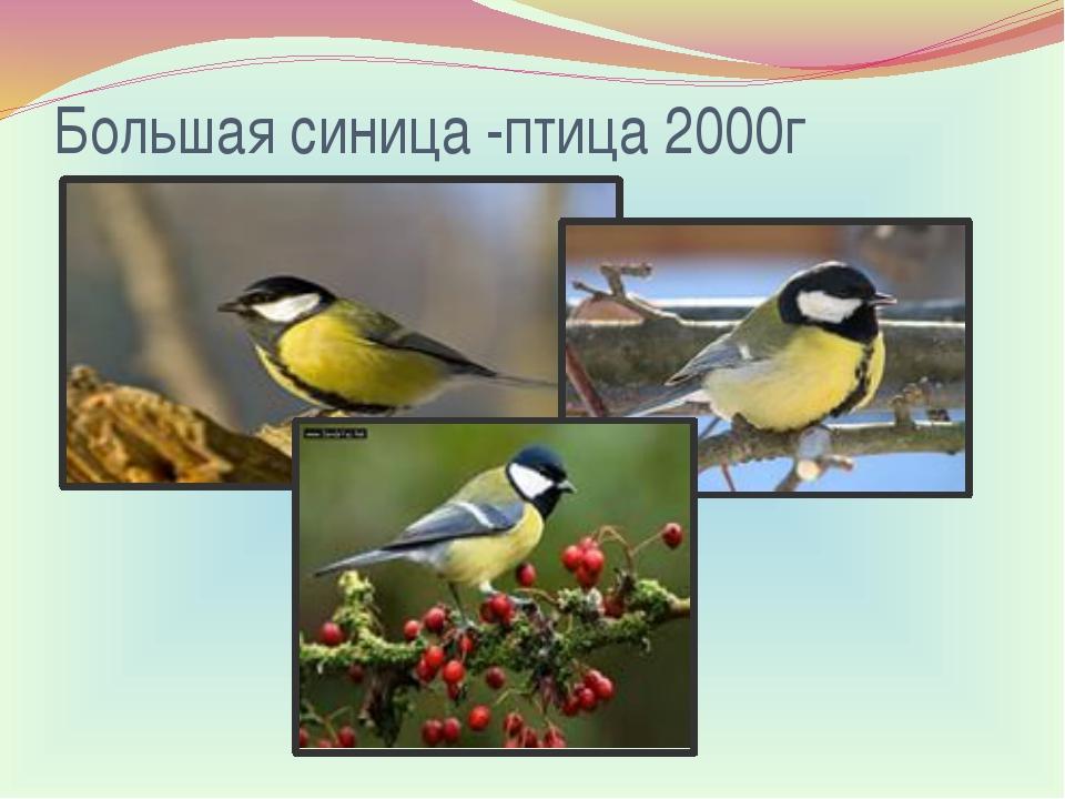 Большая синица-птица 2000г