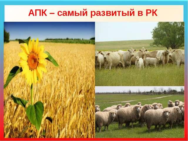 АПК – самый развитый в РК Земледелие Зерновые: яровая пшеница (75%), просо (4...