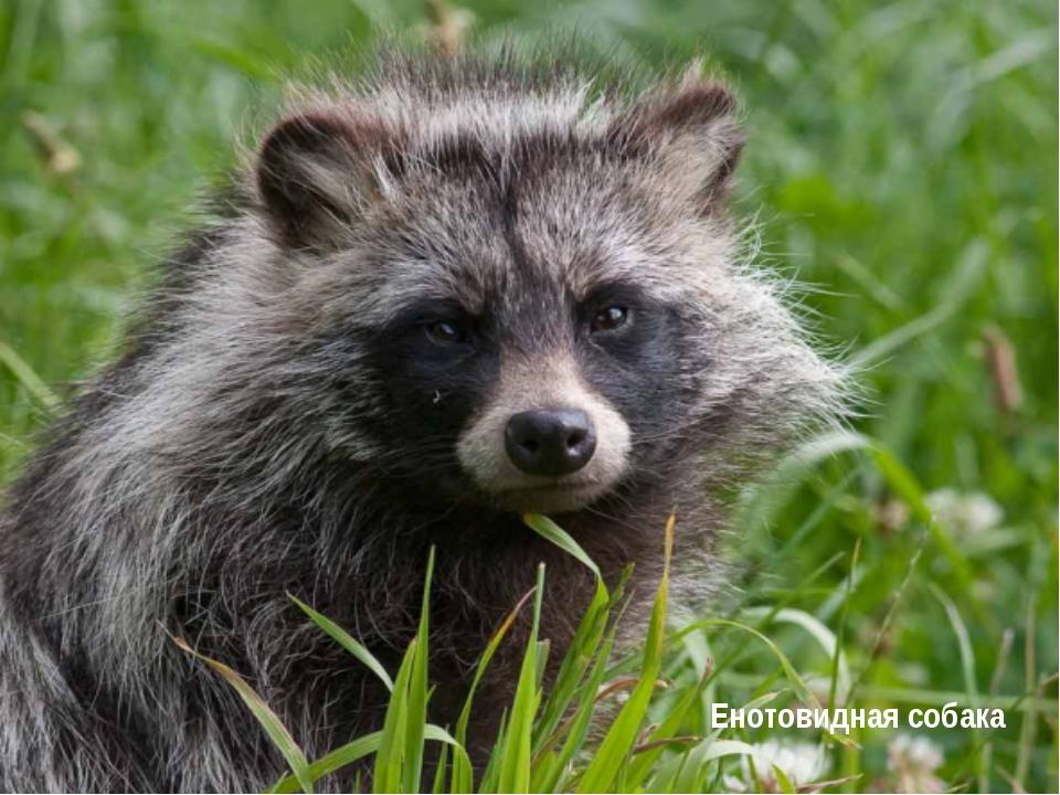 Животный мир В лесах разводят маралов. На горных лугах пасут скот, развито пч...