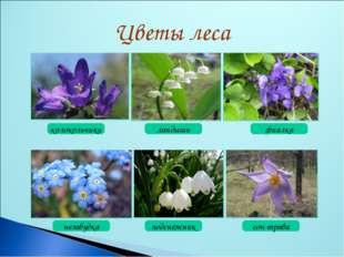 колокольчики ландыши фиалка незабудка подснежник сон-трава Цветы леса