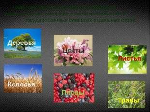 Наиболее часто встречаются следующие виды растений, имеющие особое изображени
