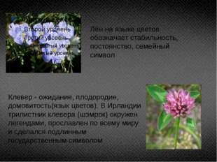 Лён на языке цветов обозначает стабильность, постоянство, семейный символ Кле