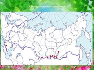 Ареал краснобрюхой горихвостки