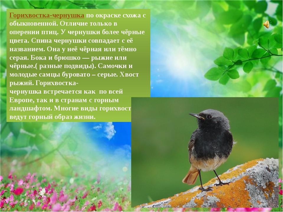 Горихвостка-чернушкапо окраске схожа с обыкновенной. Отличие только в оперен...