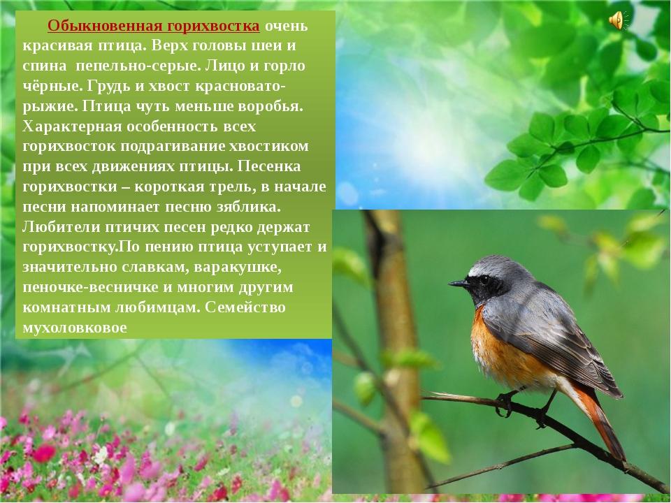 Обыкновенная горихвосткаочень красивая птица. Верх головы шеи и спинапепе...