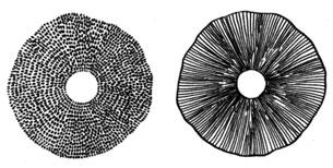 Контрольный тест по природоведению на тему quot Растения и  Грибное лукошко Андрест Б В