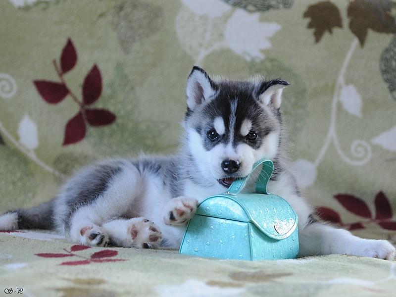 http://malamute-akbar.ru/hp/f2.jpg