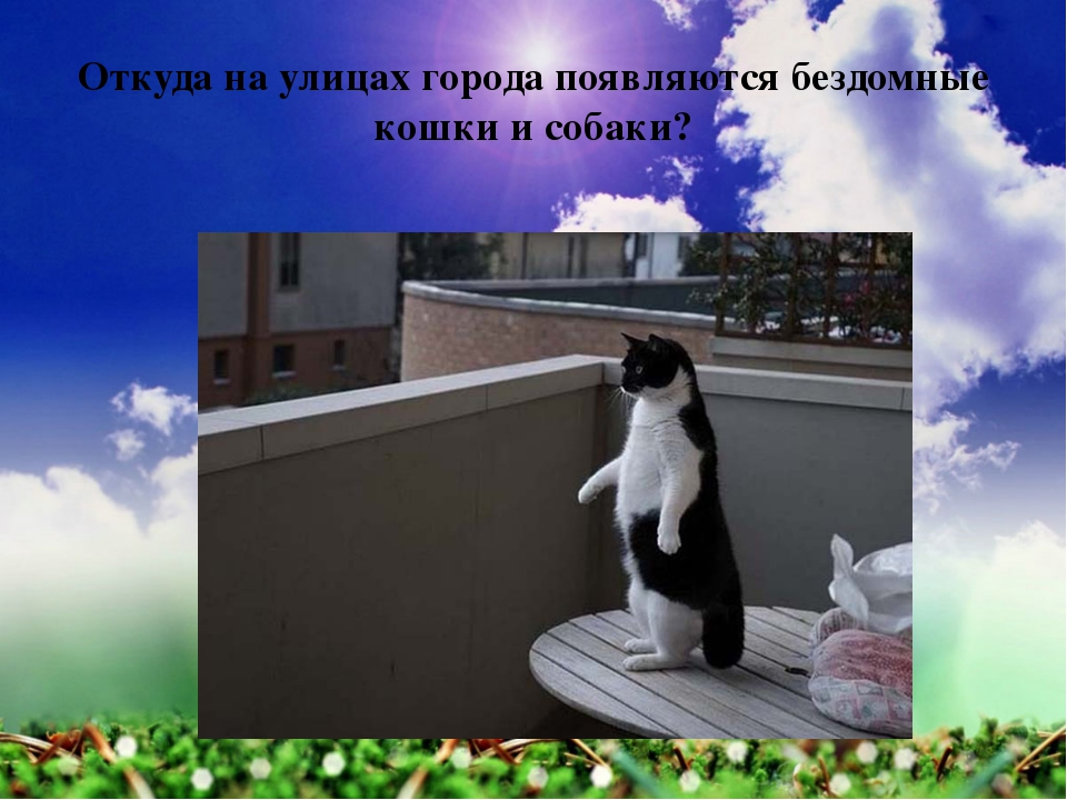 Откуда на улицах города появляются бездомные кошки и собаки?
