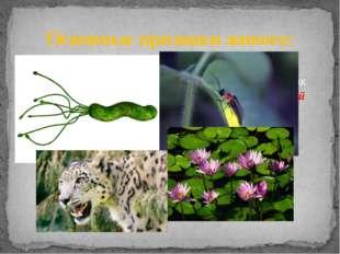 Традиционно свойства живого организма рассматриваются на примере таких живых