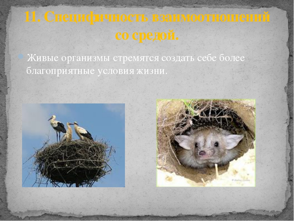 Живые организмы стремятся создать себе более благоприятные условия жизни. 11....