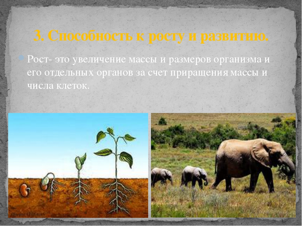 3. Способность к росту и развитию. Рост- это увеличение массы и размеров орга...