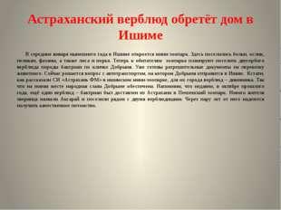 Астраханский верблюд обретёт дом в Ишиме В середине января нынешнего года в И