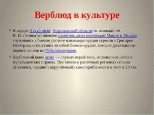 Верблюд в культуре В городеАхтубинске Астраханской областина площади им. В