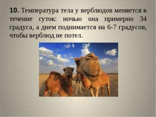 10.Температура тела у верблюдов меняется в течение суток: ночью она примерно
