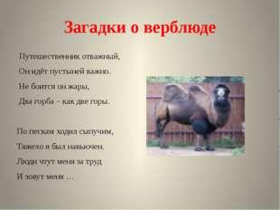 Загадки о верблюде Путешественник отважный, Он идёт пустыней важно. Не боится