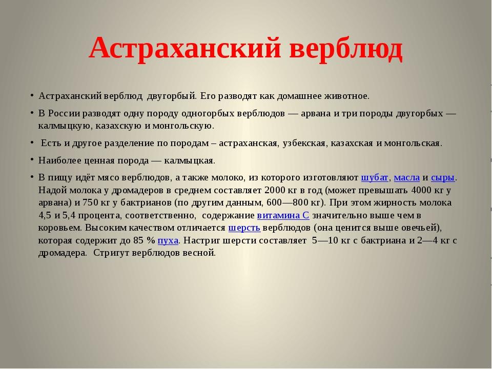 Астраханский верблюд Астраханский верблюд двугорбый. Его разводят как домашне...