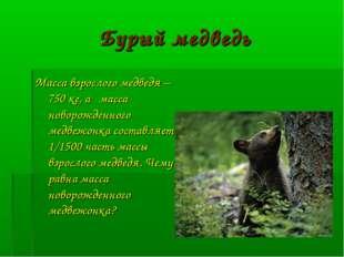 Бурый медведь Масса взрослого медведя – 750 кг, а масса новорожденного медвеж
