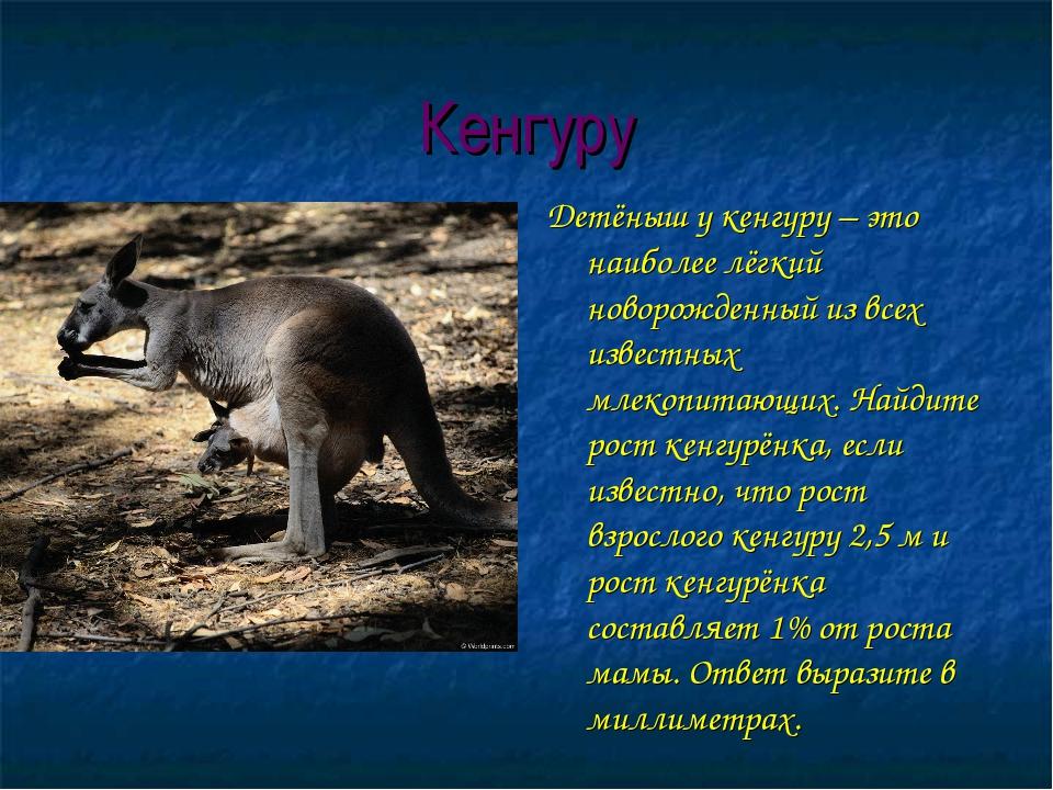 Кенгуру Детёныш у кенгуру – это наиболее лёгкий новорожденный из всех известн...