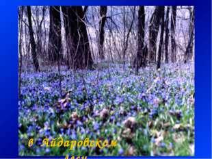 в Айдаровском лесу