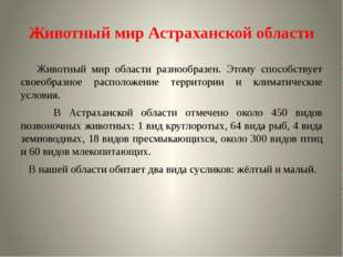 Животный мир Астраханской области Животный мир области разнообразен. Этому сп