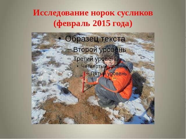 Исследование норок сусликов (февраль 2015 года)