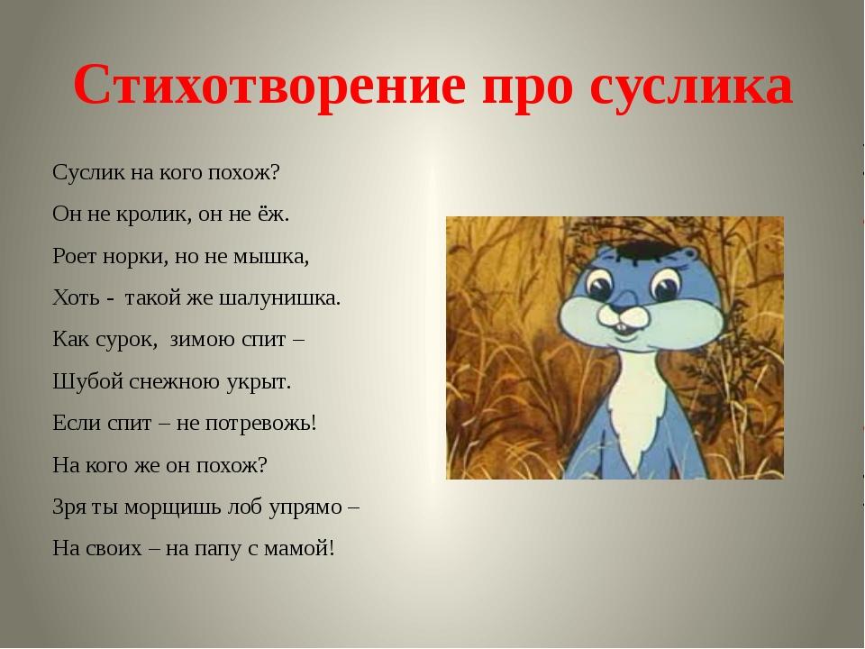 Стихотворение про суслика Суслик на кого похож? Он не кролик, он не ёж. Роет...