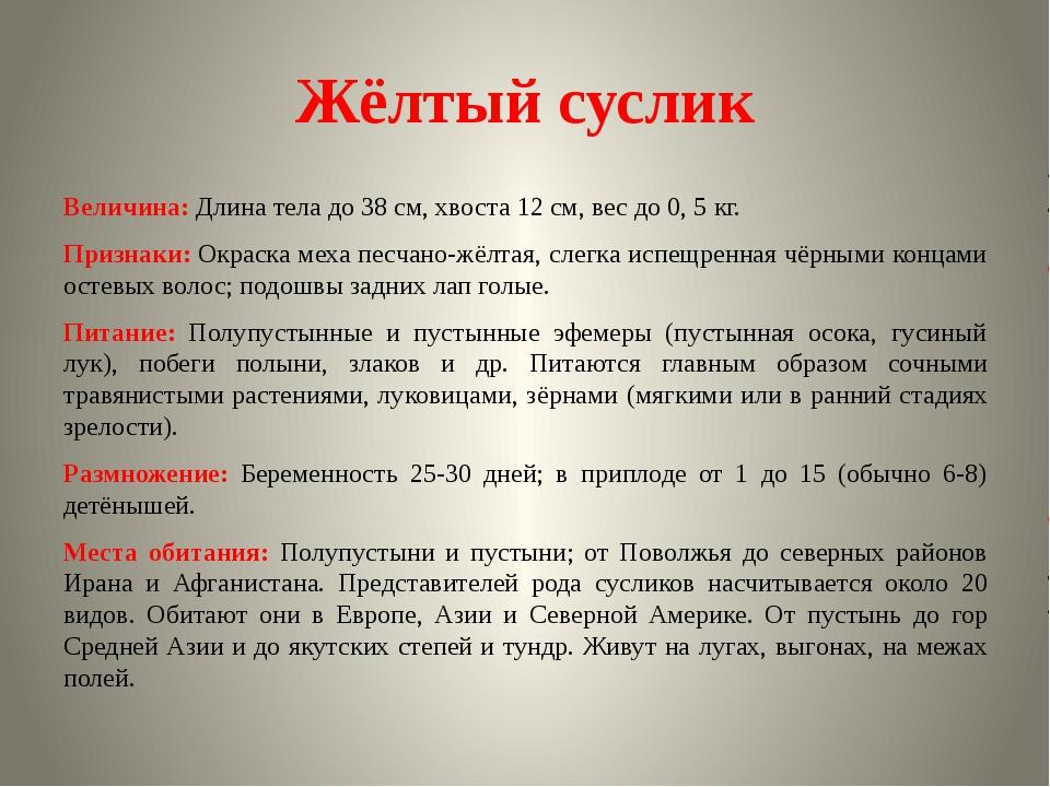 Жёлтый суслик Величина: Длина тела до 38 см, хвоста 12 см, вес до 0, 5 кг. Пр...