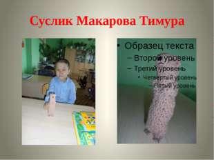 Суслик Макарова Тимура