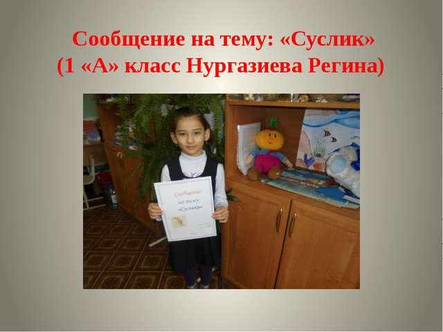Сообщение на тему: «Суслик» (1 «А» класс Нургазиева Регина)