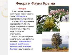 Флора и Фауна Крыма Флора В настоящее время на полуострове насчитывается свыш
