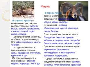 В степном Крыму из млекопитающих широко распространены: суслики, мыши, хомяк
