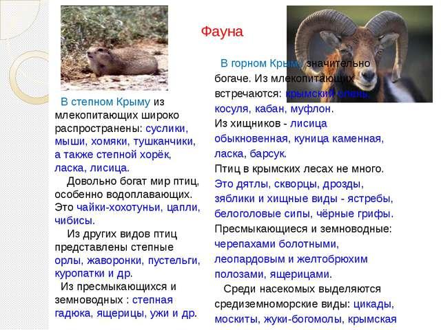 В степном Крыму из млекопитающих широко распространены: суслики, мыши, хомяк...