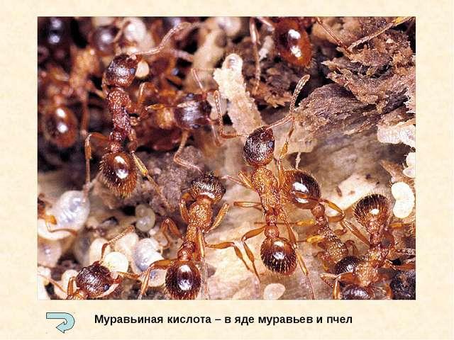 Муравьиная кислота – в яде муравьев и пчел