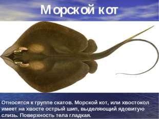 Морской кот Относятся к группе скатов. Морской кот, или хвостокол имеет на хв