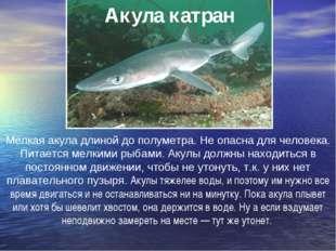 Акула катран Мелкая акула длиной до полуметра. Не опасна для человека. Питает
