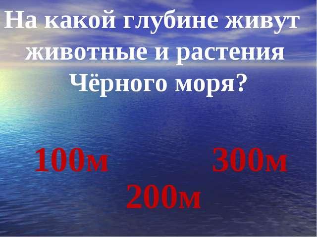 На какой глубине живут животные и растения Чёрного моря? 100м 200м 300м