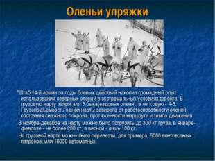 """Оленьи упряжки """"Штаб 14-й армии за годы боевых действий накопил громадный опы"""
