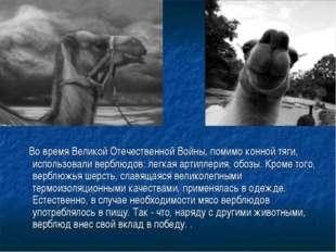 Во время Великой Отечественной Войны, помимо конной тяги, использовали вербл