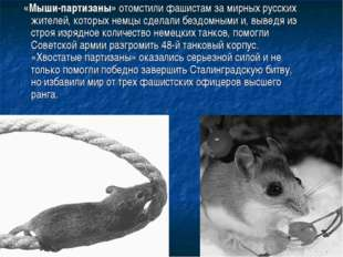«Мыши-партизаны» отомстили фашистам за мирных русских жителей, которых немцы