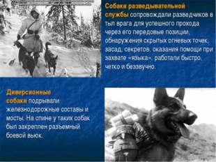 . Собаки разведывательной службысопровождали разведчиков в тыл врага для усп